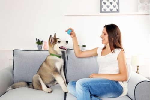 Have_More_Fun_for_Less_with_Your_Four-Legged_Friends4-min