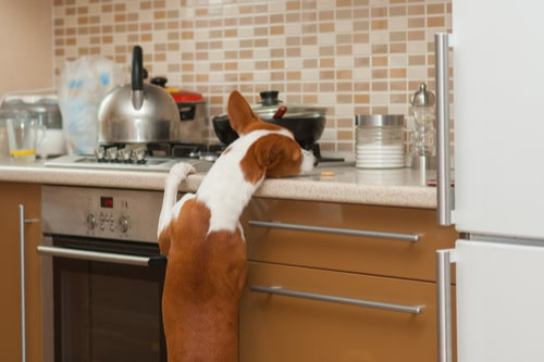 household-items-harmful-to-pets2