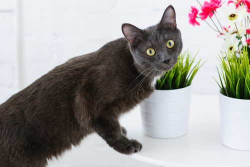 household-items-harmful-to-pets4